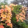 花咲くフタリ