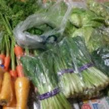 野菜いただきました!