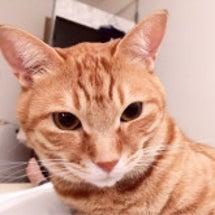 朝起きたら、猫がいて