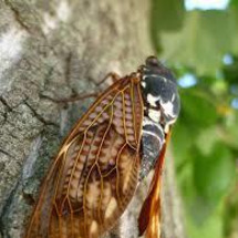 蝉の一生と人間の煩悩