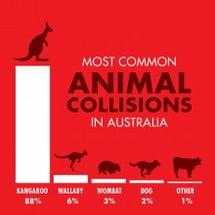 衝突事故の動物ランキ…