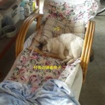 村長の読書椅子と猫と…