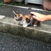 子猫ラッシュ
