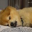 眠たい子。