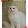 迷子猫「ぎんちゃん」…