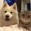 犬と猫のセラピールー…
