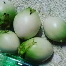 緑小丸なす、