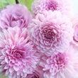 【夏の花撮影のコツ】…