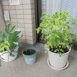 植物の知恵に想う。