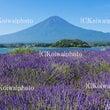 夏の訪れ富士山
