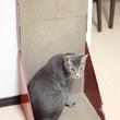 スタンドタイプの猫の…