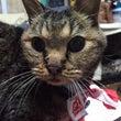 我が家の長老猫ちーす…