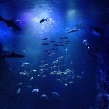 またまた水族館♪
