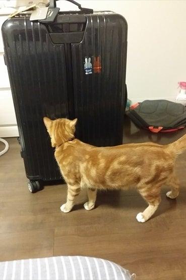スーツケースを発見
