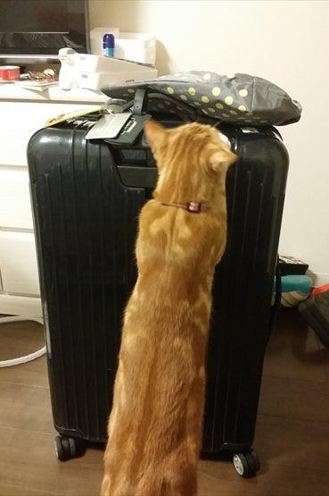 スーツケースと身長同じ