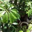 我が家のミニミニ植物…