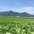 今週の野菜情報【7月…