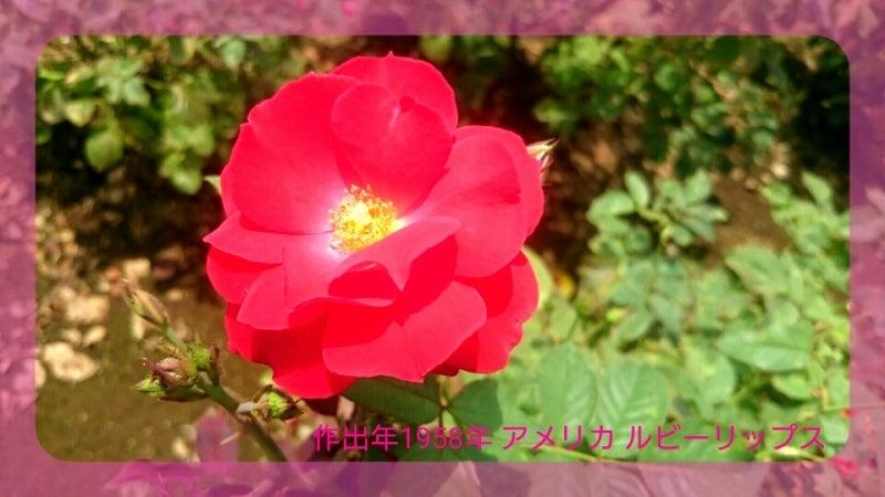 IMG_20160718_194452598.jpg