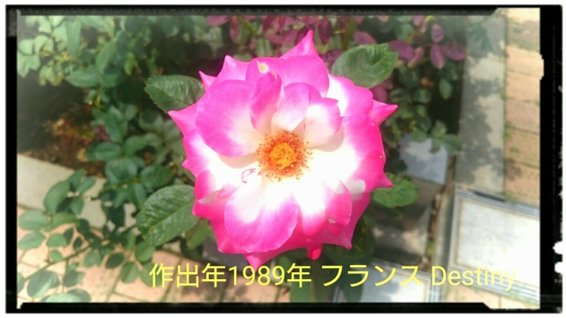 IMG_20160718_194453846.jpg