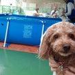 DOG POOL@阪…