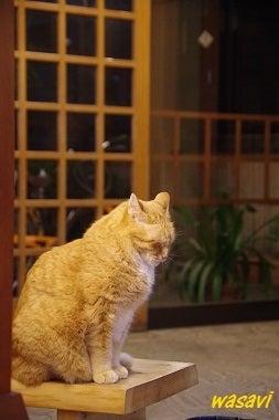 看板ネコさん6