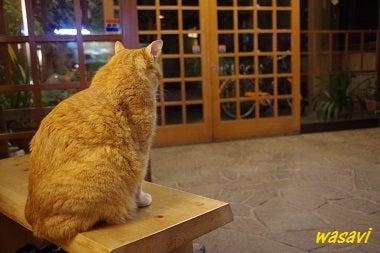 看板ネコさん5