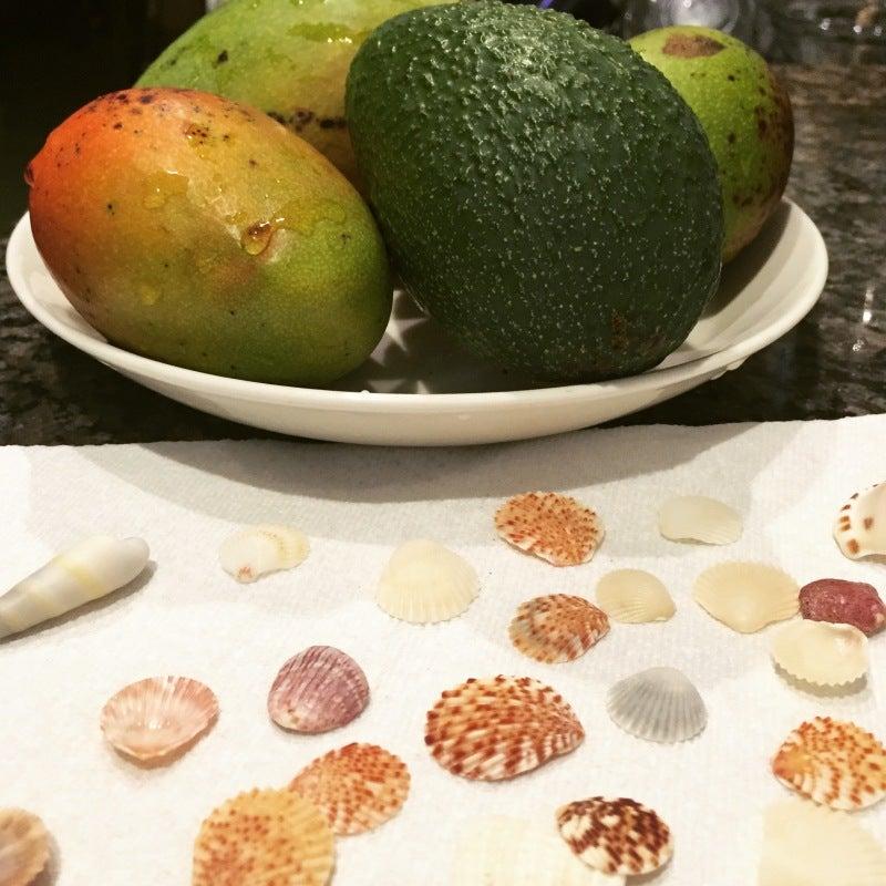 #islandlife @abundance #mango #avo #shells