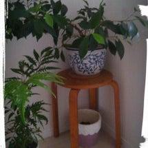 空気清浄樹と内野久美…