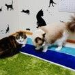 ボディガードされる猫…