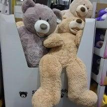 コストコの大きな熊の…