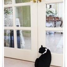 我家の黒ネコちゃん♪