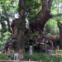 念願の来宮神社✩YU…