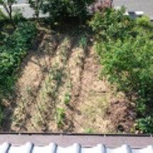 家庭菜園2ヶ月前と、…
