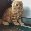 美猫に新メンバー!!…