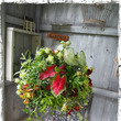 観葉植物・カラーリー…
