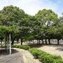 公園 の落ち葉