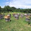 採蜜のシステム化?