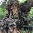 木に会いたくて