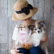 ■夏の犬ごはんレッス…