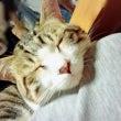 Stray Kitt…