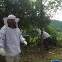 初ハチミツ収穫(≧∇…