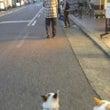 夕散歩(^o^)