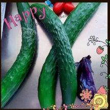 ★夏野菜の収穫★