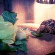 亀とホップ
