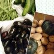 夏野菜で夏を満喫