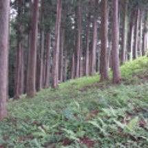 カナカナの森