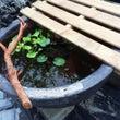 庭DIY2(未完)と…