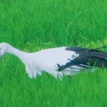 何という鳥でしょう?
