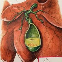 肝臓再生に大切なもの…