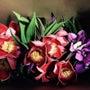 南国の花。